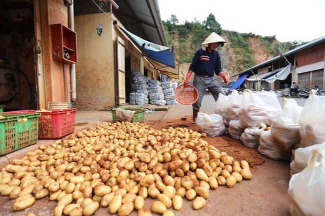 Khoai tây Trung Quốc lại được vào chợ Đà Lạt