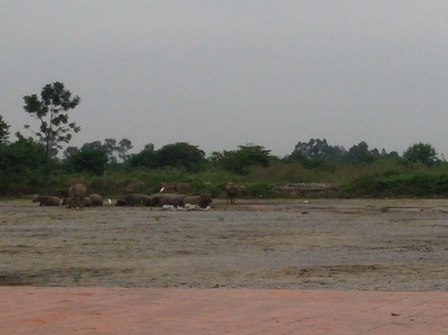 Hà Nội: Cận cảnh loạt công viên lớn đang chờ khởi công (Phần 2)