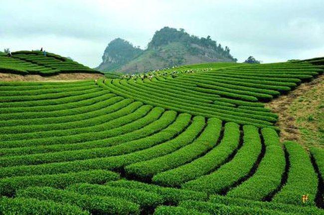 Hà Nội siết chặt quản lý sử dụng đất nông, lâm trường