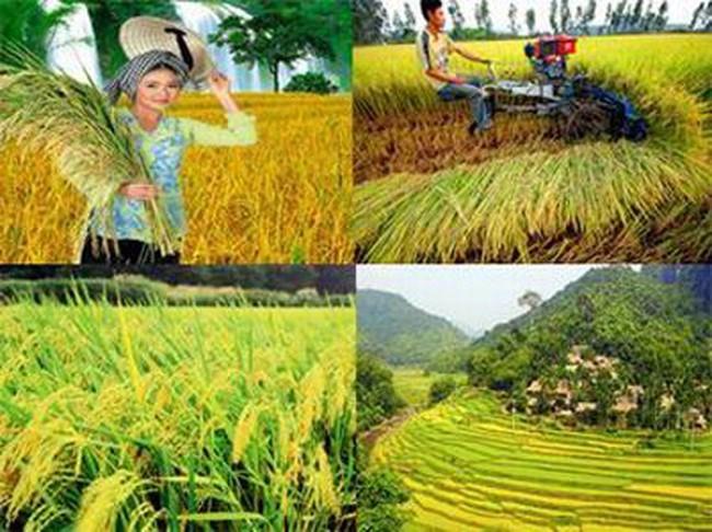 36/63 tỉnh, thành phố triển khai tái cơ cấu nông nghiệp