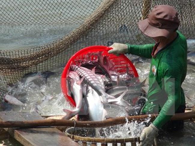 Mỹ ban hành quy định mới với nhà cung cấp cá da trơn Việt Nam