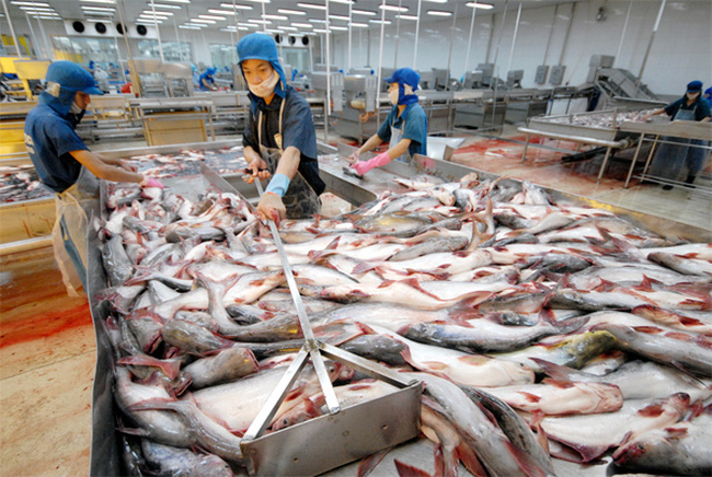 Vĩnh Hoàn xuất khẩu gần 144 triệu USD trong 7 tháng, hoàn thành 60% kế hoạch năm