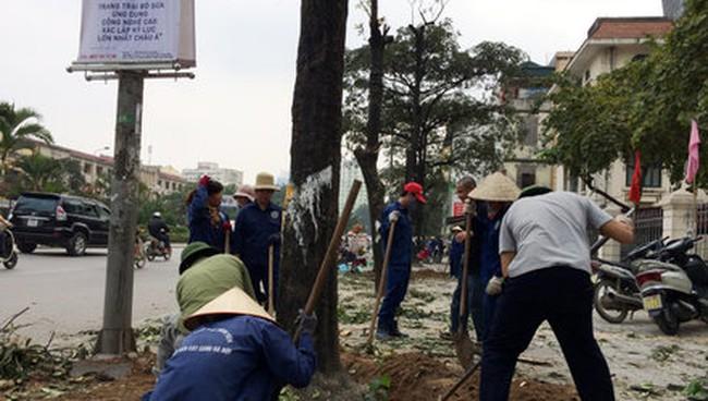 """Thời sự 24h: Hà Nội """"trả nợ"""" báo chí 21 câu hỏi về đề án thay cây"""