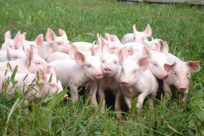 Chăn nuôi Phú Sơn: EPS năm 2014 đạt 12.515 đồng/cổ phiếu