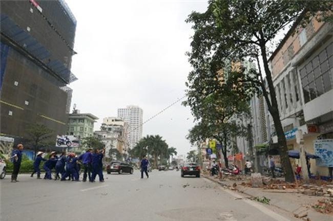 Thời sự 24h: Hà Nội báo cáo Thủ tướng đề án thay thế 6.700 cây xanh
