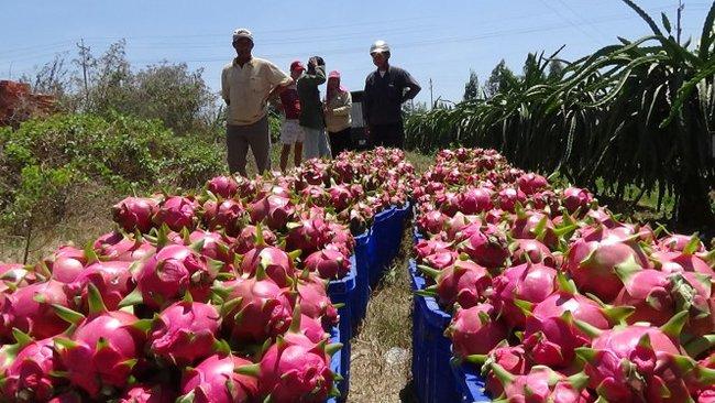 Trung Quốc phá giá đồng nhân dân tệ: Xuất khẩu hàng Việt thêm khó