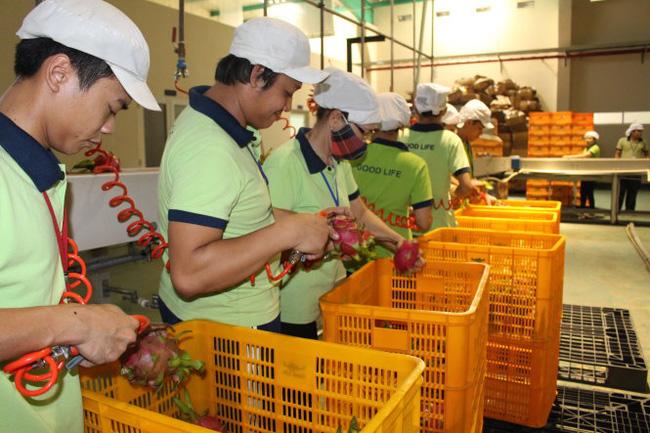 Rau quả xuất khẩu sắp cán mốc 2 tỉ USD