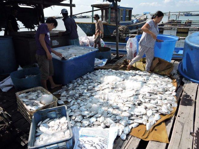 Ngư dân đem cá chết đổ trước cổng nhà máy