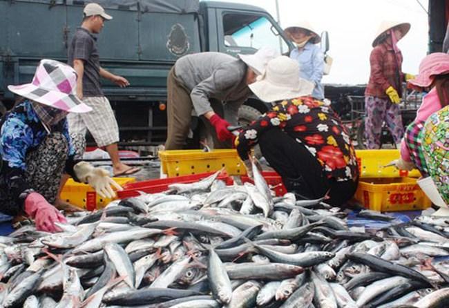 Cá nục được mùa, giá vẫn giữ mức cao