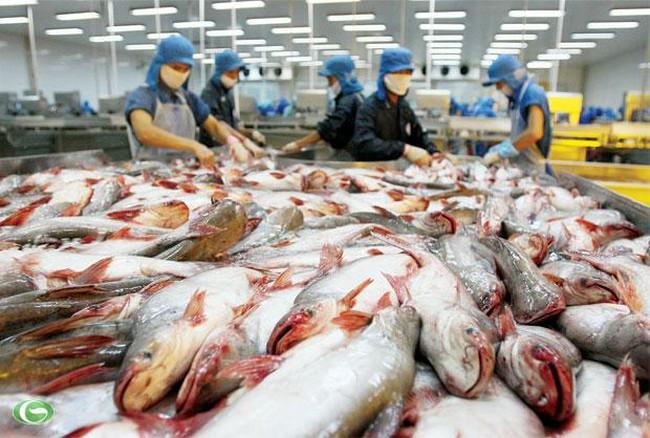Xuất khẩu cá tra sang Thái Lan tăng mạnh