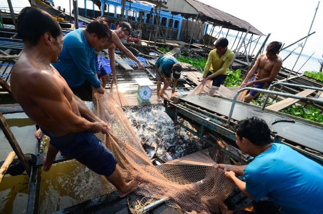 Bỏ quy hoạch con tôm, con cá: Các bộ tranh cãi quyết liệt