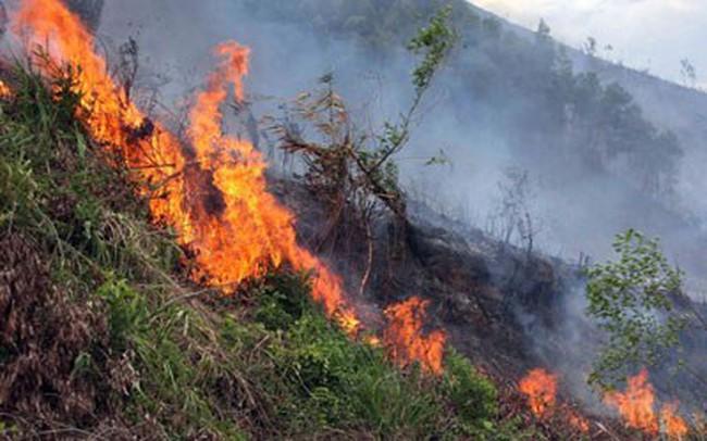 Lửa thiêu rụi 12 ha rừng huyện Duy Xuyên (Quảng Nam)