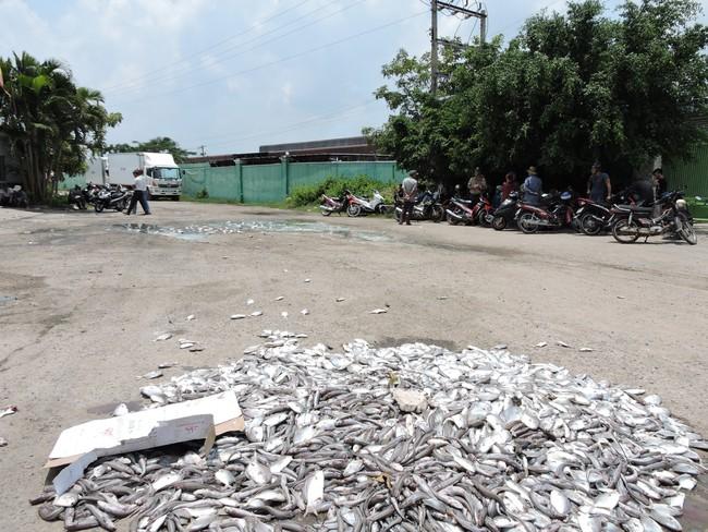 Làm cá chết trắng sông, 8 DN ăn phạt tiền tỷ