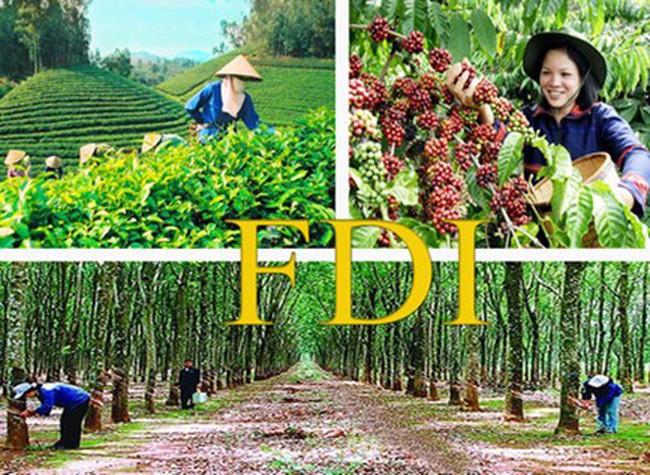 FDI trong nông nghiệp đạt 312 triệu USD/năm