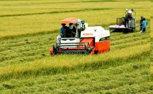 Hợp tác công - tư: Hướng đi của tương lai lúa gạo Đông Nam Á
