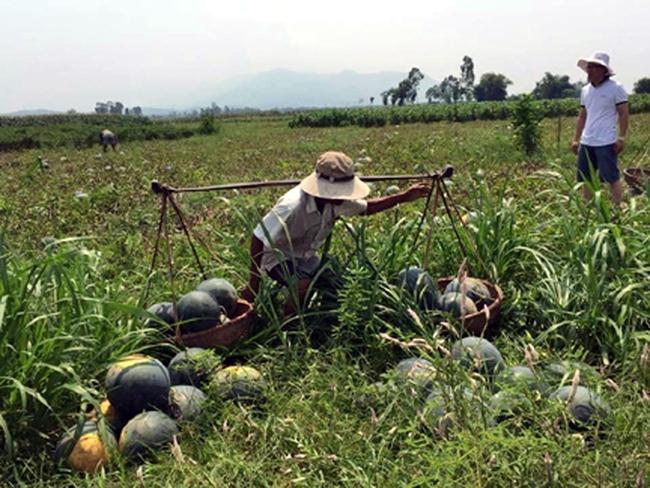 """""""Nếu không giải quyết được bài toán nông dân làm gì thì hội nhập mới được 50%"""""""