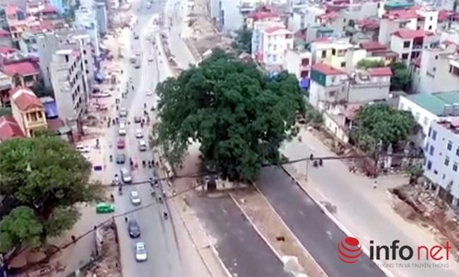 """Cận cảnh con đường ngàn tỷ đồng """"né"""" cây đa hơn 100 năm tuổi giữa Thủ đô"""