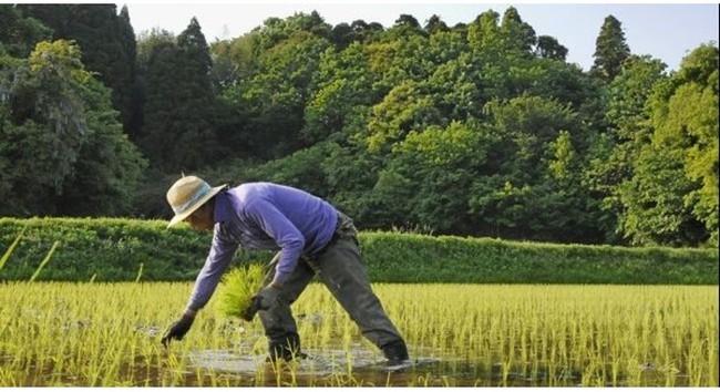 """Ngành nông nghiệp Nhật có """"gục ngã"""" thời kỳ hậu TPP?"""