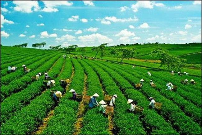 Công ty Nông nghiệp Xanh Hưng Việt đăng ký niêm yết trên HNX