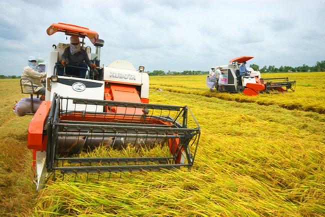 Đã mua trên 60% chỉ tiêu tạm trữ gạo