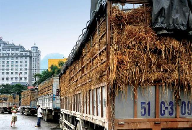 Tín dụng cho nông nghiệp: Nếu tiền đi không trở lại?