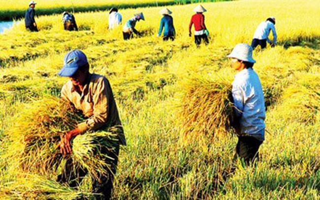 Năm 2015, nông nghiệp phấn đấu đạt xuất khẩu 32 tỷ USD