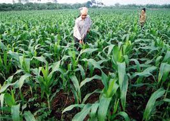 Hút vốn ODA vào nông nghiệp: Sẵn sàng cho giai đoạn mới