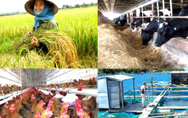 Vì sao doanh nghiệp ít muốn đầu tư vào nông nghiệp?