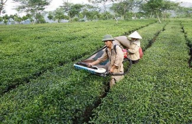 Bổ sung quy định về hình thức phá sản công ty nông lâm nghiệp