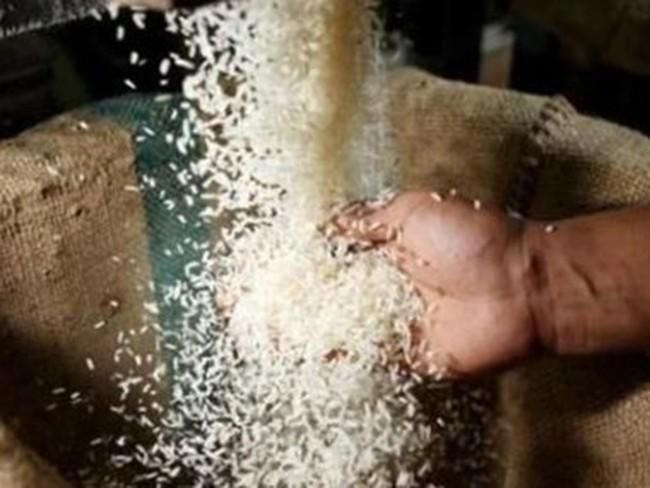 Ai Cập tạm bỏ lệnh cấm xuất khẩu gạo do năng suất lúa tăng