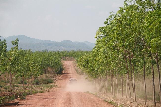 San ủi 700ha đất rừng khai thác gỗ trái phép tại Gia Lai: Chính quyền không hề hay biết