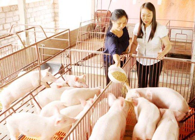 Giá thức ăn chăn nuôi hạ nhiệt