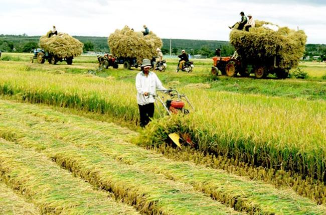 Vì sao doanh nghiệp ít đầu tư vào nông nghiệp?