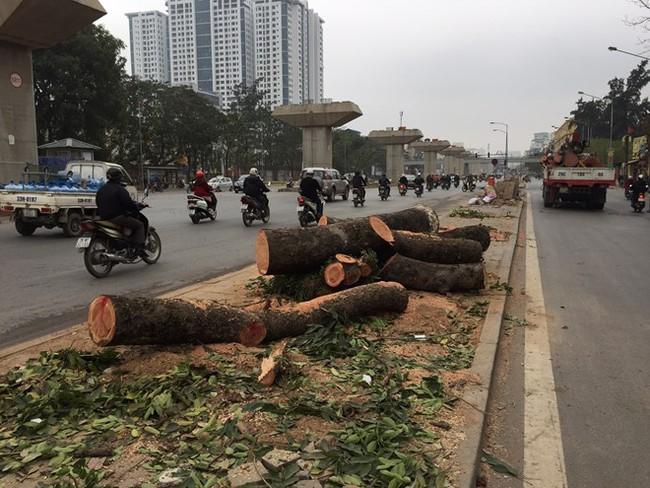 Thanh tra Chính phủ: Việc chặt cây xanh Hà Nội có dấu hiệu vi phạm Luật Thủ đô