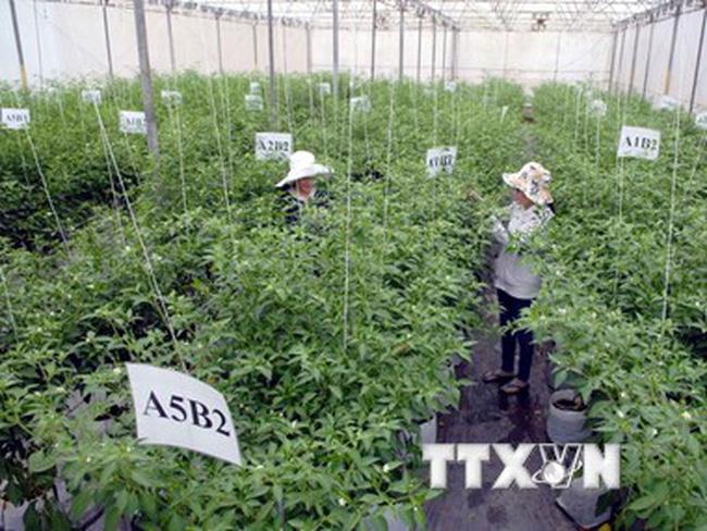 Cần Thơ đầu tư 44 triệu USD xây 3 khu nông nghiệp công nghệ cao
