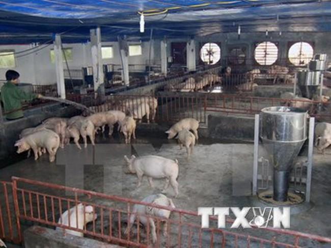 """Bộ trưởng Cao Đức Phát chỉ đạo """"siết"""" quản lý chất cấm trong chăn nuôi"""