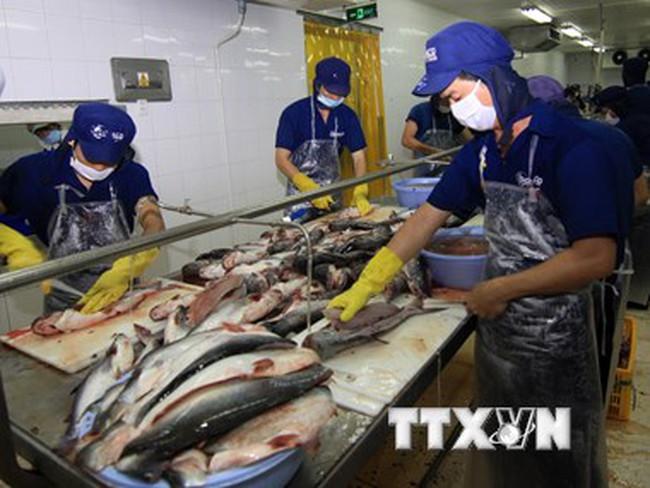 Xuất cá tra sang Trung Quốc tăng mạnh nhưng diễn biến khó lường