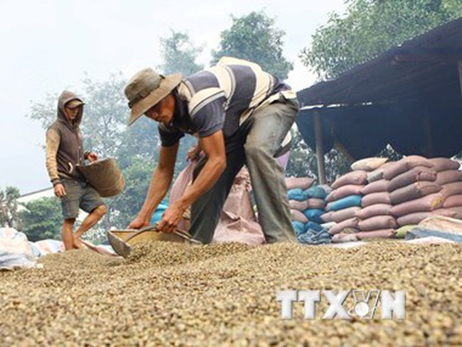 Giá trị xuất khẩu nông, lâm, thủy sản đồng loạt giảm trong tháng 11