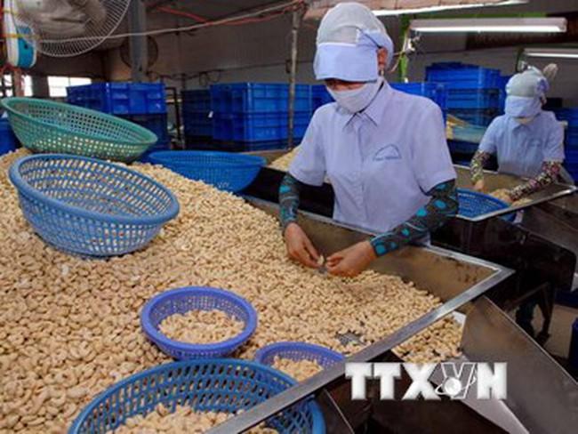 Xuất khẩu hạt điều ước tính đạt 2,5 tỷ USD trong năm 2015