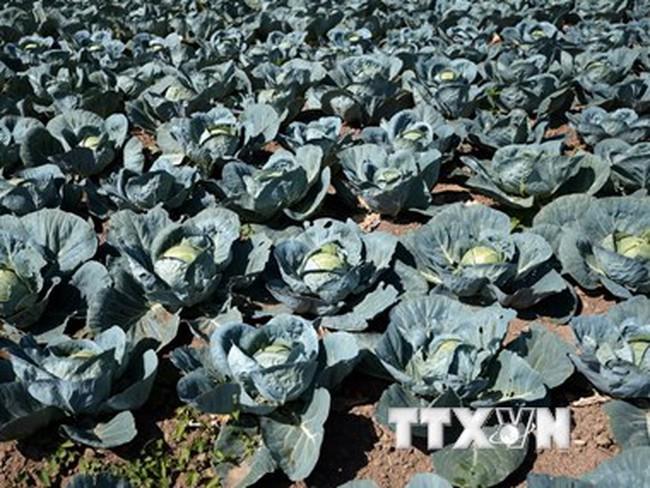 Giá thực phẩm lao dốc, EU hỗ trợ nông dân 500 triệu euro