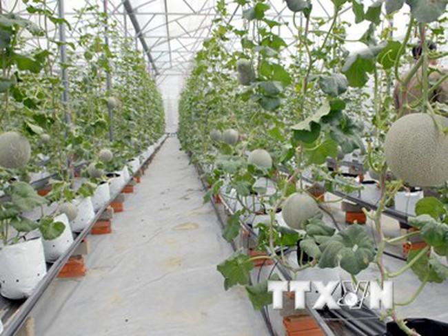 TP. Hồ Chí Minh và Cuba trao đổi kinh nghiệm phát triển nông nghiệp
