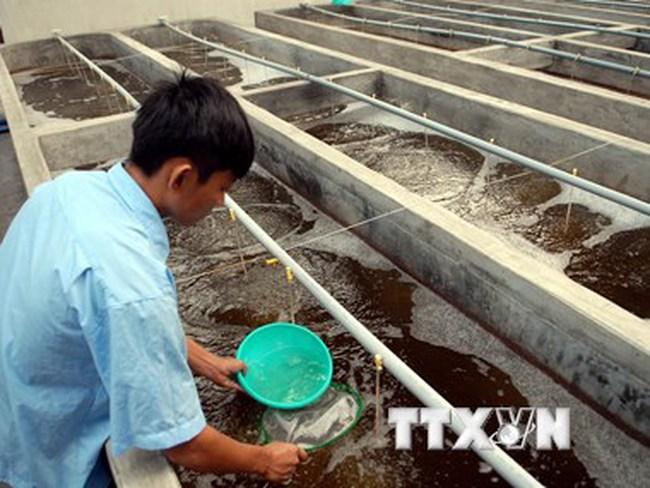 Bình Thuận dự kiến cung cấp 20 tỷ con tôm giống trong năm nay
