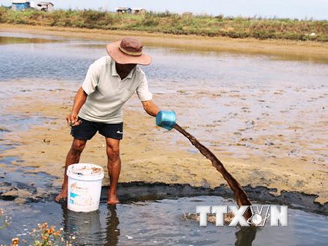 Tôm chết khiến 8.500 hộ nuôi ở Trà Vinh thiệt hại nặng nề
