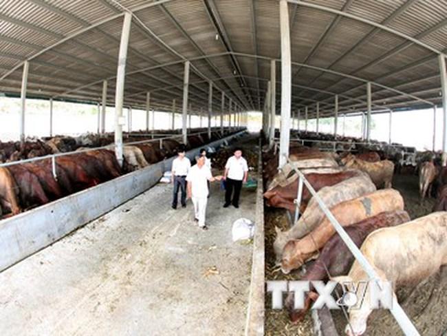 Hoàng Anh Gia Lai sẽ ra mắt thương hiệu thịt bò trong năm 2016
