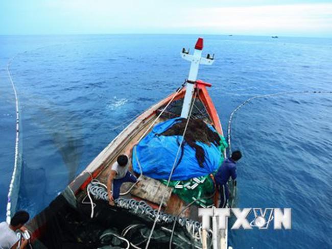 Chuẩn bị đầu tư xây dựng Trung tâm nghề cá lớn tại Khánh Hòa