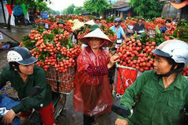 Vải thiều Việt Nam sắp có mặt tại Pháp