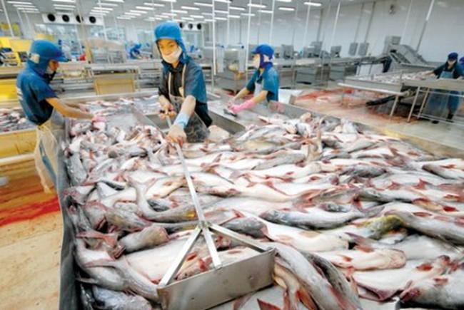 Xuất khẩu thủy sản giảm mạnh: Không nên nóng vội