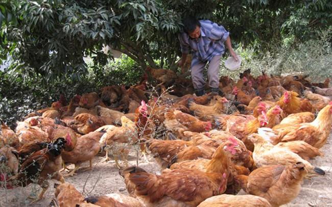 Ngành chăn nuôi - nỗi lo yếu thế trong tiến trình hội nhập