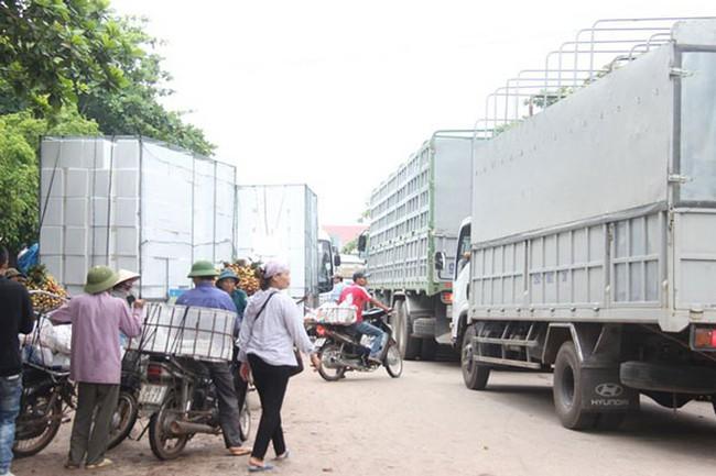 Cước phí làm khó trái cây xuất khẩu