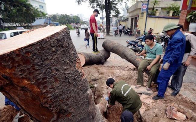 Thời sự 24h: Hà Nội họp báo về dự án thay mới 6.700 cây xanh